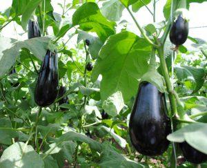 farming-practices-1
